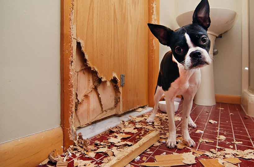 what you can do to avoid damage caused by pets